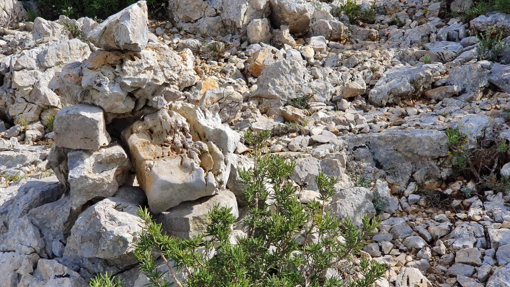 Bergtour: Mola de Genessies (Tarragona) - - 14