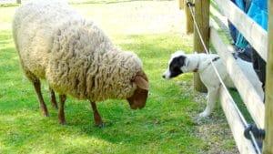 Top5 Tips für die Hundeschule zu Hause - Schule - 5