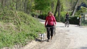Hundeschule - bei Fuß gehen