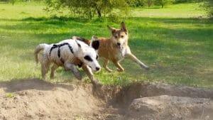 Top5 Tips für die Hundeschule zu Hause - Schule - 6