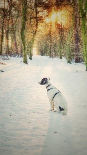 Rückblick: Tierschutz Hund nach 1 Jahr in Deutschland - tierschutz - 3 - tierschutz,hund,deutschland