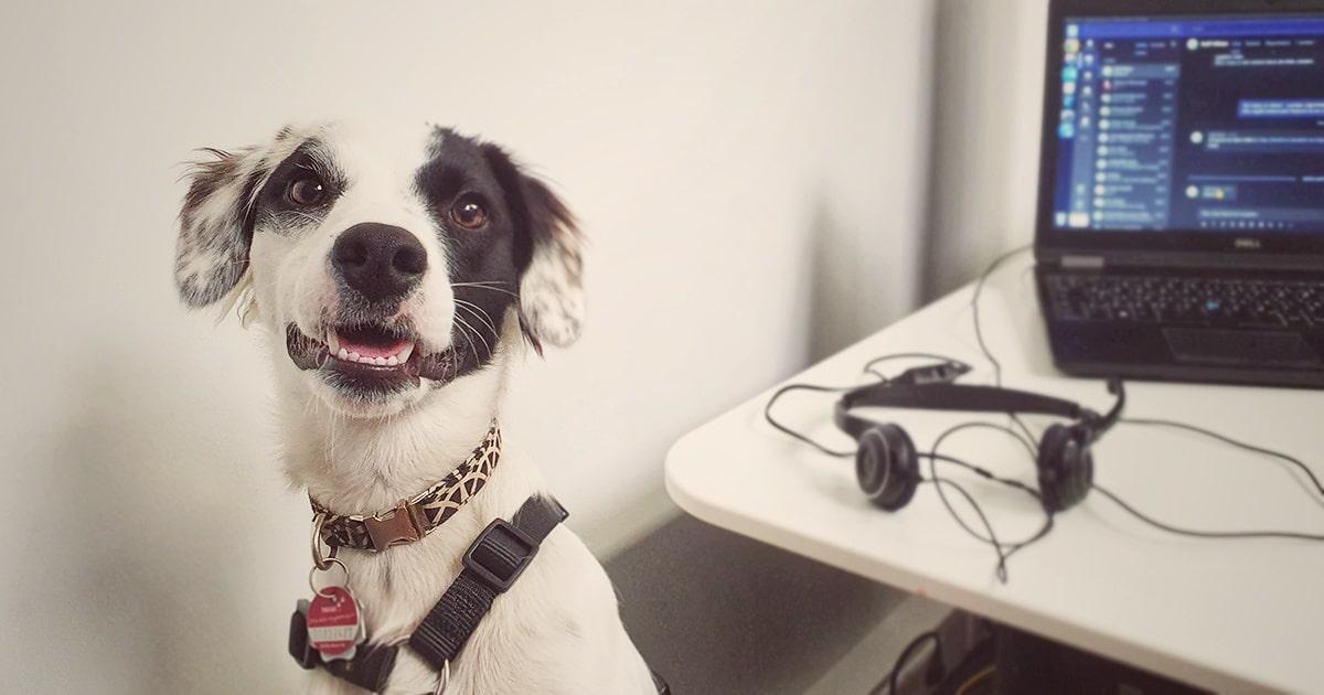Rückblick: Tierschutz Hund nach 1 Jahr in Deutschland - tierschutz - 1