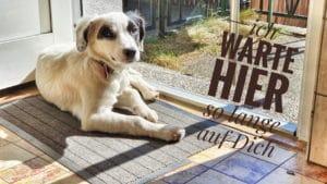 Hund sitzt an der Türe und wartet